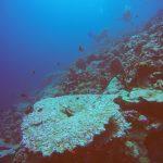علماء يكتشفون شعابا مرجانية في البحر الأحمر مقاومة لتغير المناخ