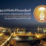 بونجي وأراسكو تسعيان لشراء أنشطة لمؤسسة الحبوب السعودية