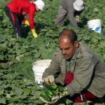 الكويت ترفع الحظر عن استيراد منتجات زراعية مصرية