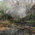 إعدام عشرات أشجار الزيتون بمياه المستوطنات الاسرائيلية العادمة شرق نابلس