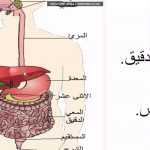 فيديو| الأمراض الأكثر شيوعا في الجهاز الهضمي