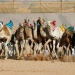 صور| سباقات الهجن في ثوب جديد بصحراء وادي رم بالأردن