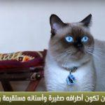 فيديو  بيسو.. ملك جمال القطط في مصر