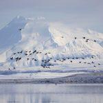 التغير المناخي يؤدي إلى زيادة قياسية في تساقط الثلوج في ألاسكا