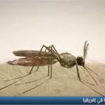 فيديو  مقاومة البعوض للمبيدات تهدد مكافحة الملاريا بأفريقيا