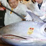 فيديو| كيف تصنع «التونة» من المصنع مباشرة؟