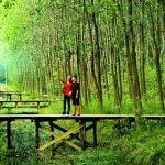 الصين تزرع غابات جديدة على مساحة واسعة