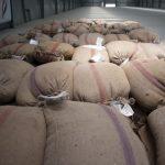 تجار: هيئة السلع المصرية تشتري 350 ألف طن من القمح