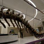 بيع ذيل ديناصور في مزاد لصالح مشروع إعمار في المكسيك بعد زلزال