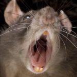 فيديو| هجوم من الفئران المتوحشة على مناطق سياحية بباريس