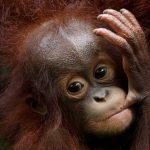 صور| حديقة حيوان سنغافورة تكشف عن مئات من صغار حيواناتها
