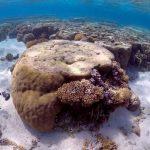 مخلفات البلاستيك تسبب تدهور حالة الشعاب المرجانية