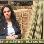 فيديو| مراسلة الغد ترصد المشاكل التي تواجه صناعة «سعف النخيل» في مصر