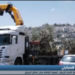 فيديو| الاحتلال يقتلع أشجار الزيتون ويجرف أراض جنوب القدس
