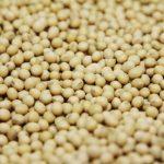 سوريا تطرح مناقصة مجددا لشراء 50 ألف طن من فول الصويا وكمية مماثلة من الذرة