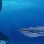 «الحوت الأزرق».. كيف يرى مؤسس اللعبة ضحاياه؟ وكيف رد البرلمان المصري؟