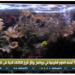 فيديو| متحف الطبيعة في بروكسل يوثق تاريخ الكائنات الحية