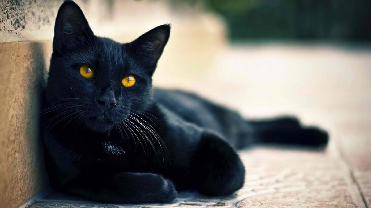خرافات حول العالم!أشهر الخرافات التي مازال يؤمن بها البشر حول العالم -رؤية-القطة-السوداء-في-الحلم