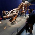 عرض ديناصور تي ريكس عمره 67 مليون عام في باريس