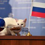 آمال روسيا أمام مصر معلقة بصحة توقعات القط إخيليس