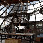 بيع هيكل ديناصور من سلالة جديدة مقابل أكثر من مليوني دولار