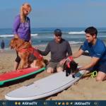 فيديو شواطئ كاليفورنيا تشهد مسابقة ركوب الأمواج للكلاب فقط