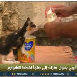 فيديو| ليبى يحول منزله إلى ملجأ لقطط الشوارع الجريحة