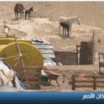 فيديو| الخان الأحمر.. تجمع فلسطيني يسعى الاحتلال لإزالته وتشريد أهله