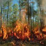 الحرارة والجفاف قد يؤججان حريق غابات في كاليفورنيا