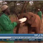 فيديو| حديقة في كينيا لرعاية الأفيال الأيتام