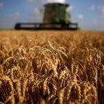 وزارة التموين المصرية: أصدرنا الضمانات المناسبة لشحنات القمح