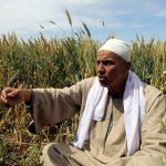 هيئة السلع المصرية تعلن أول مناقصة شراء أرز للعام 2018