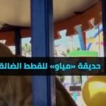 فيديو| تعرف على حديقة مياو للقطط الضالة