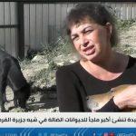 فيديو  أنا فيسبلوفسكايا.. امرأة تؤسس أكبر ملجأ للحيوانات الضالة بجزيرة القرم