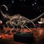 لعدم وجود مشترين.. فشل مزاد على ديناصورين في باريس