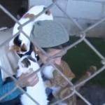 فيديو | ستار.. مبادرة سورية لإنقاذ الحيوانات