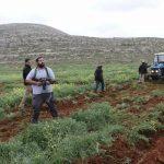المستوطنون يواصلون اعتداءاتهم الإجرامية ضد الفلسطينيين في نابلس