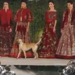 كلب ضال يخطف الأضواء في عرض أزياء بالهند