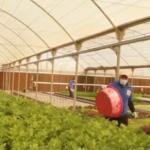 الزراعة المائية.. أحدث طرق دعم الطعام العضوي في مصر