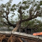 ارتفاع عدد قتلى الإعصار في موزامبيق إلى 217 شخصا