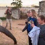 أرادت تصويره فصفعها.. هذا ما فعله الفيل الأفريقي بفتاة أمريكية