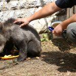صور| عايدة.. دبة يتيمة تجد المأوى في حديقة حيوان سراييفو