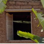 الطحالب تحفز الحس الابتكاري لعامل لبناء مكسيكي