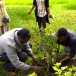 إثيوبيا تزرع 350 مليون شجرة في يوم واحد