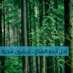 لحل أزمة المناخ.. تريليون شجرة فقط