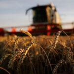 فاو: أسعار الغذاء العالمية تنخفض بشدة في أبريل بسبب كورونا