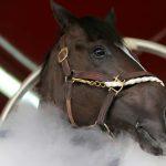 دبي تستخدم تكنولوجيا التبريد لعلاج الخيول لأول مرة في العالم