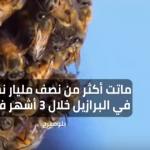 العالم يفقد أكثر من نصف مليار نحلة خلال 3 أشهر فقط