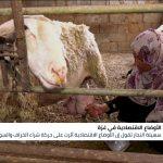 قصة امرأة فلسطينية تكسب قوت يومها من رعي الأغنام