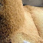 احتياطي مصر الاستراتيجي من القمح يكفي حوالي 5 شهر